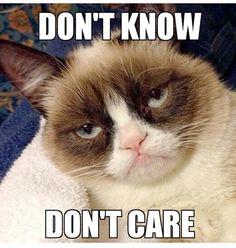 Did y'all know 'Grumpy Cat' aka Tardar Sauce, is a girl? Grumpy Cat Quotes, Grumpy Cat Movie, Gato Grumpy, Funny Grumpy Cat Memes, Funny Animal Memes, Animal Quotes, Funny Animal Pictures, Funny Cats, Funny Animals