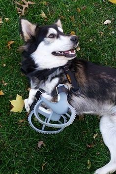 This Incredible Dog Has A New Lease On Life Thanks To 3D Printing