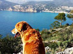 Hundewanderung auf Mallorca