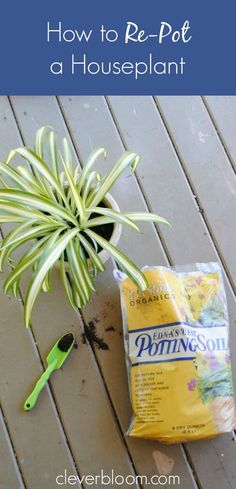 Do you need to re-pot your houseplants but not sure how? This post will answer the questions you need to know before re-potting! Pictures and step-by-step directions will help you learn How to Re-Pot a Houseplant. It's Spring! And time to start re-pott Best Garden Tools, Garden Tool Set, Garden Ideas, Backyard Ideas, House Plants Decor, Plant Decor, Aloe Vera, Types Of Houseplants, Growing Lavender
