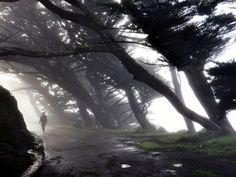 Point Reyes, California Photograph by Anton Barmettler
