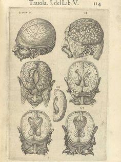 """Página de """"Anatomia del corpo humano"""" del anatomista español Juan Valverde de Amusco (1525-1587)"""