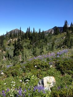 Chinook Pass in late August (okay, that's Washington, but it's a near neighbor!)