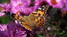 pillangók kertje  gyermelyikert.hu Insects, Blog, Animals, Animales, Animaux, Animais, Animal