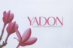 Yadon Sans Serif Typeface by Symufa on @creativemarket