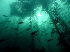 fish, kelp forest, and sea image Dark Green Aesthetic, Water Aesthetic, Kelp Forest, Slytherin Aesthetic, All Nature, Greek Gods, Deep Sea, Ocean Life, Marine Life