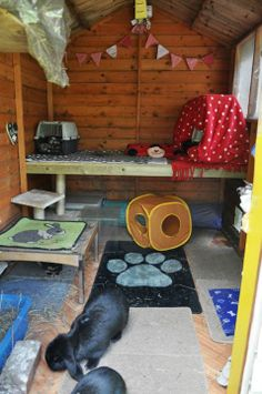 Lets see the inside of your shed set ups? - Rabbit shed Bunny Sheds, Rabbit Shed, House Rabbit, Pet Rabbit, Rabbit Garden, Bunny Cages, Rabbit Cages, Pet Bunny Rabbits, Baby Bunnies