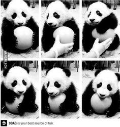 Level of Cuteness: Little Panda