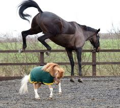 Wonder Boy by Day, Miniature Horse by Night: Real-Life My Little Pony