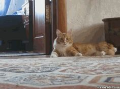 Top 15 Very Funny Cat GIFs I'm not a cat person... But these are funny!