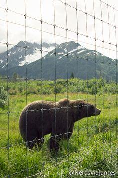 Bear - Alaska Wildlife Conservation Center - Alaska - USA