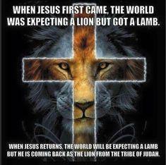 Jesus Lamb, My Jesus, Jesus Christ, Christian Symbols, Christian Humor, Christian Art, Jesus Return, Tribe Of Judah, He Is Coming
