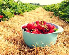 Erdbeermarmelade Rezept_2