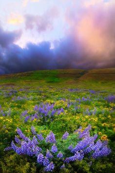 The Dalles Springtime, Columbia Gorge - the Washington side of the Washington/Oregon border