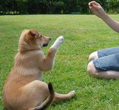 Comment Dresser Un Chiot - 20 techniques à connaître - Éducateur canin - Guide du chien