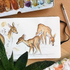 """Joy 🌿 [21