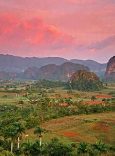Viñales Valley, morning, Cuba. Never experienced habitat like this before. Wonderful part of the world.