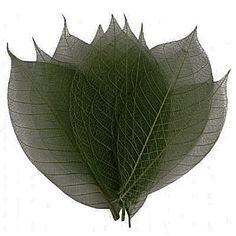 Dinglefoot's Scrapbooking - Green Rubber Tree Skeleton Leaves, $2.99 (http://www.dinglefoot.com/green-rubber-tree-skeleton-leaves/)