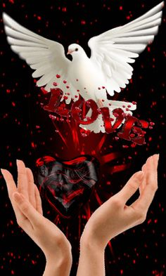 Beautiful love pictures - Purity of the SOUL Dove Images, Dove Pictures, Love Heart Images, Love You Images, Beautiful Rose Flowers, Flowers Gif, Love Flowers, Beautiful Love Pictures, Beautiful Gif