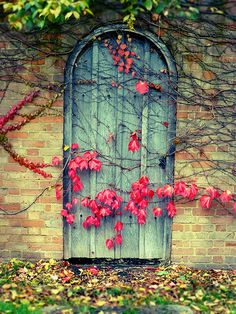 A door to the secret garden