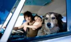 Top 5 Safety Tips for Traveling With a Pet in the Car It would be difficult to leave that sweet face at home.