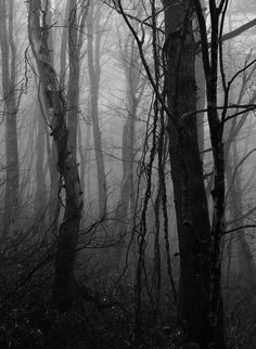 """""""'Forests have secrets,' he said gently. 'It's practically what they're for. To hide things. To separate one world from another.'"""" ― Catherynne M. Valente, Deathless"""