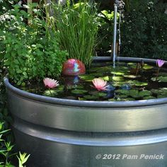 Beautiful stock-tank pond with drip-faucet fountain. www.ContainerWaterGardens.net