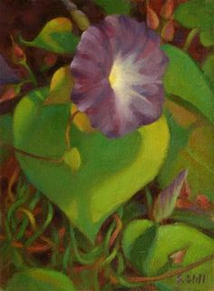 """Daily Paintworks - """"Morning Glory Study"""" - Original Fine Art for Sale - © Sharon Will"""