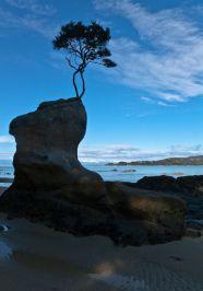 Low Tide Walking at Abel Tasman National Park