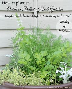 How to Plant an Easy Outdoor Potted Herb Garden and Tips for Planting and Taming Invasive Mint! Healthy and Delicious!
