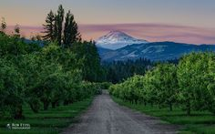 Pears to Adams by Rob Etzel on 500px