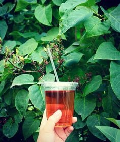 Cold brew Gaba Oolong. Smooth and calming.  #oolong #gaba #teadrinker#tealover#tea #drinks#茶#lifestyle #coldbrew#tea#colddrinks #summer#icetea#vancouver#kitsilano #kitsilanobeach#yvr#qepark #queenelizabeth