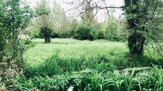 Claude Monet, Vineyard, Country Roads, Gallery, Garden, Outdoor, Bonjour, Outdoors, Garten