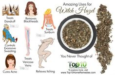 ∆ Witch Hazel...10 Amazing Uses for Witch Hazel You Never Thought of...Controls Excessive Sweating -   The astringent and antiperspirant properties in witch hazel help control excessive sweating, also known as hyperhidrosis.  The tannic acid in it leads to constriction of the duct openings, which inhibits excess sweating. You can use witch hazel to control excessive sweating on your face, feet, palms and armpits...