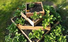 Small Space Growing Espalier Fruit Trees, Dwarf Fruit Trees, Fruit Bushes, Blueberry Varieties, Blueberry Plant, Vertical Farming, Fall Vegetables, Victory Garden, Citrus Trees