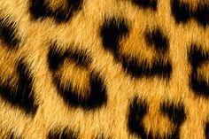 1879822227_bec1a575ed Texture
