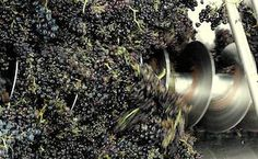 Stems are then regarded as a waste product, and can be used as fertiliser or mulch. But some winemakers are seeing an opportunity for a different style of winemaking. Wine Press, Buy Wine Online, Wine Making, Stems, Wines, Opportunity, Canning, Drift Wood, Trunks
