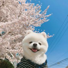 Image uploaded by Find images and videos about cute, blue and aesthetic on We Heart It - the app to get lost in what you love. Cute Little Animals, Like Animals, Cute Funny Animals, Animals And Pets, Cute Puppies, Cute Dogs, Dogs And Puppies, Doggies, Fluffy Dogs
