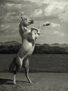 Beautiful and Stunning Horse Photography by Wojtek Kwiatkowski