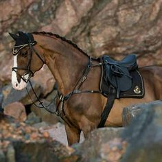 """neighsinthenight: """" just gimme everything in this picture Link: www.hookseurop… neighsinthenight: """" just gimme everything in this picture Link: www.c… """" - Art Of Equitation Cute Horses, Pretty Horses, Horse Love, Beautiful Horses, Animals Beautiful, Horse Gear, Horse Tack, Bay Horse, Horse Photos"""