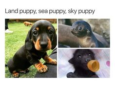 "Cute baby animals - miracufic "" neverparted "" "" but everything changed when the fire puppy attacked "" Cute Animal Memes, Animal Jokes, Cute Funny Animals, Funny Animal Pictures, Cute Puppies, Cute Dogs, Cute Babies, Cute Little Animals, Cute Creatures"