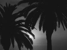 nothing gold can stay  #theoutsiders  #sun #sunset #blackandwhite #blacknwhite #bnw #bnwphotography #natural #naturelovers #nature #naturephotography #natural #palm #beach #lima #perú #peru #shadows