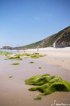 San Antolín beach - best surf spot in Llanes, Asturias Best Surfing Spots, Asturias Spain, Golf Courses, San, Beach, Water, Outdoor, Naturaleza, Scenery