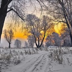 Lovely Golden Glow Winter Scene [photographer and location unknown] I Love Winter, Winter Colors, Winter White, Winter Snow, Winter Light, Color Splash, Color Pop, Snow Scenes, Winter Scenes