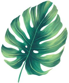 Plant Painting, Plant Art, Painting & Drawing, Paper Flower Art, Pottery Painting Designs, Image Nature, Christmas Drawing, Tropical Art, Plant Illustration