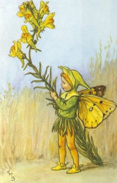 Toadflax - by Cicely Mary Barker