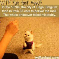 This Belgian city tried to train cats to deliver mail - WTF fun facts - No kidding!