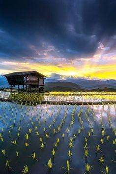 Sunrise over Mae Jam rice terraces, Thailand