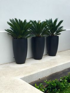 Planters | Tall matt black planters with Cycads | Nadia Gill Landscape Architect