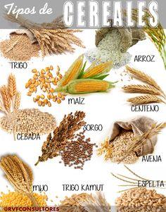 CEREAL:  Planta que produce semillas en forma de granos de las que se hacen harinas, es decir, dan frutos farináceos, que se uti...